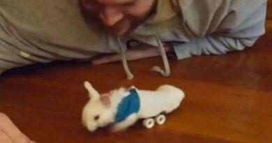 Доброта спасёт мир! Инвалидная коляска для кролика! Невероятное видео!